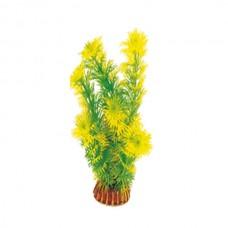 Растение 19см Триол 1998 Р Амбулия желто-зел. 74044037