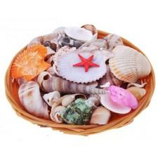 Морские ракушки в корзине  (18см)--