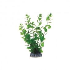 Растение 19см Триол 1990 Р Бакопа